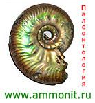 логотип Аммонит.ру