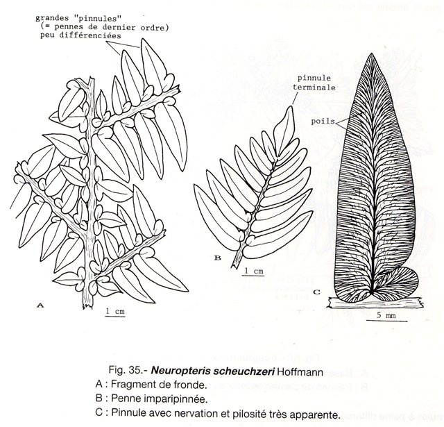 paleobotany the biology and evolution of fossil plants pdf