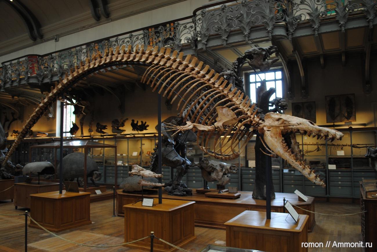 Картинки по запросу Базилозавр