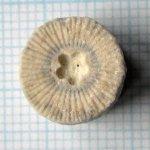 http://www.ammonit.ru/upload/foto/2251/131843036265688-sm.jpg