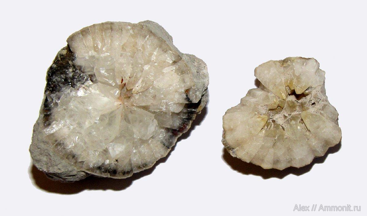 Ра�коло��е �и��оидеи О�довик�кие окаменело��и