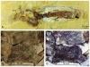 Кольца Лизеганга в ископаемых колеоидеях