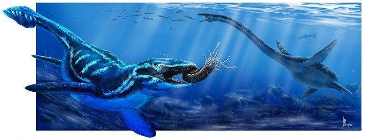 Мозазавр (Prognathodon) охотится на аммонита, рядом проплывает плезиозавр (Elasmosaurus). Рисунок Alan Bénéteau
