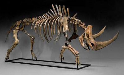 Носорог. Опасность для человека