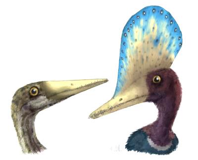 реконструкция самки и самца Darwinopterus