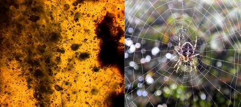 паутина в янтаре и современная паутина